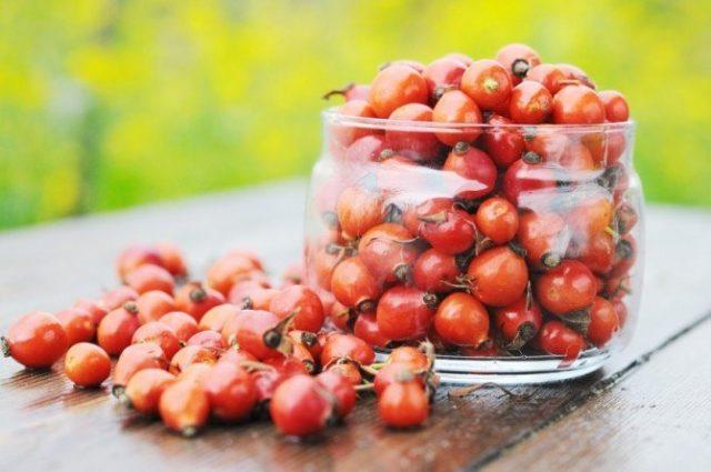 Для терапии подагры рекомендуются компрессы из отвара корней шиповника и пероральное употребление отваров из плодов